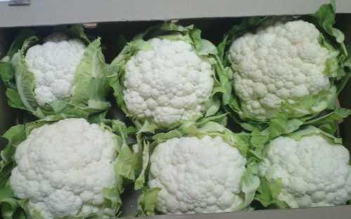 Выбор лучших сортов цветной капусты: фото,