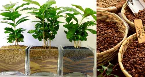 Кофейную гущу также рекомендуется добавлять в хну