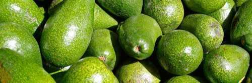 Авокадо для похудения; рецепты, отзывы